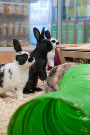 hutch: Curious young rabbits in hutch Stock Photo