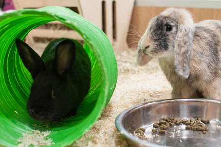 the hutch: Two young rabbits in good home
