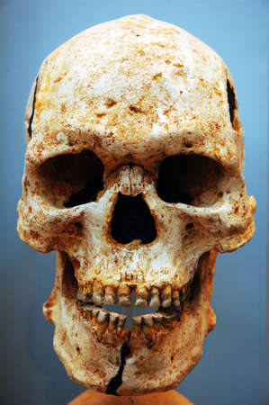 Skull on blue Stock Photo - 4154521