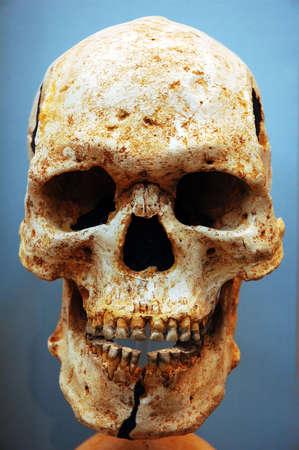 Skull on blue Stock Photo - 4154521