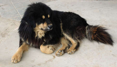 black: Black Dog