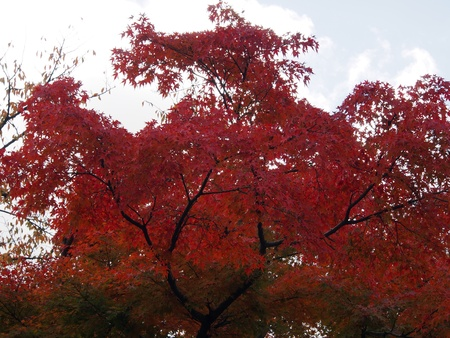 foliage of Kenrokuen Stock Photo - 16313022