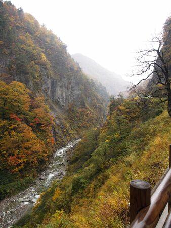 Foliage of Hakusan