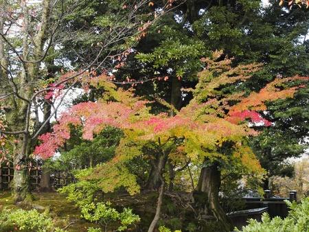 foliage of Kenrokuen Stock Photo - 16391950