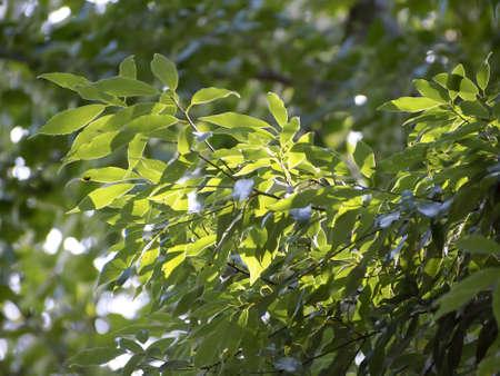 Verdure with Sunlight