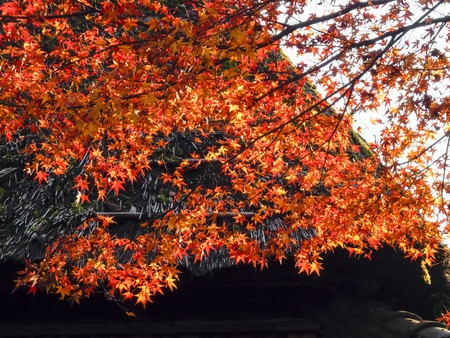Thatched roof and Autumn leaves