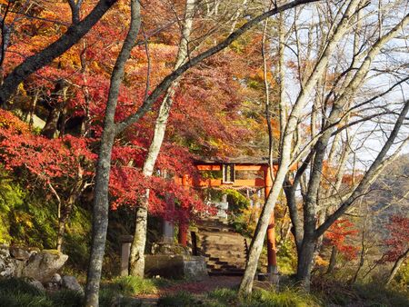 Torii and Autumn leaves Stock Photo - 16524967
