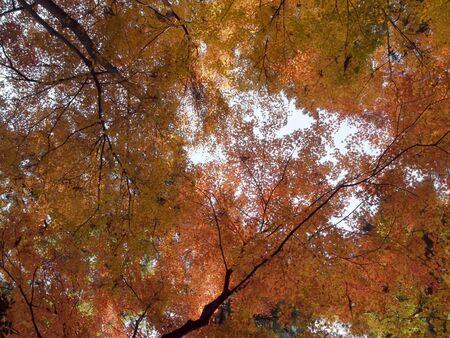 Autumn leaves Stock Photo - 16524966