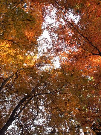 Autumn leaves Stock Photo - 16524968