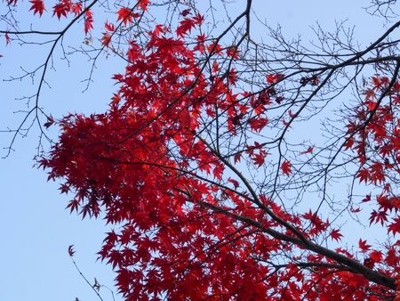 blue sky and autumn leaves Stock Photo - 16524963