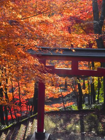 Torii and Autumn leaves  Stock Photo - 16886549