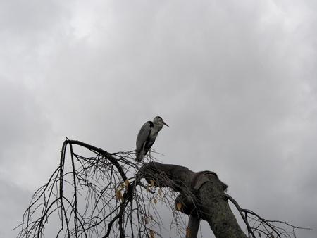 Heron on the tree