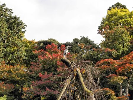 Heron and autumn leaves