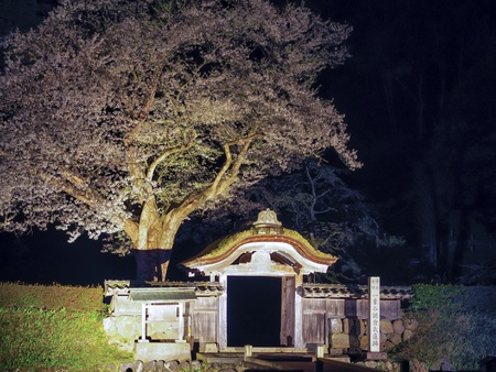 Ichijodani Asakura ruins Tang Gate and cherry blossom Stock Photo - 19014684