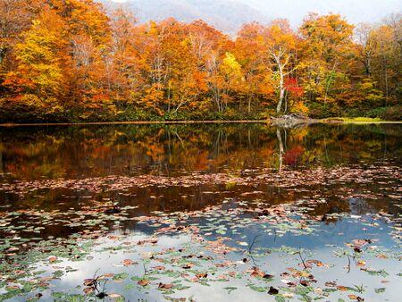 autumn leaves at Karikomi-Ike