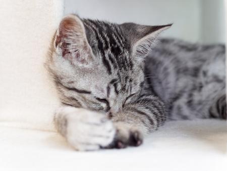 Sleeping kitten Stock Photo