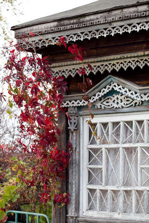 twined: Rural house window twined with autumn wild grape liana (Parthenocissus quinquefolia)