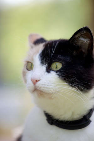 calico: Beautiful calico cat looking to the left in awareness