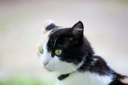 calico cat: Beautiful calico cat looking to the left in awareness