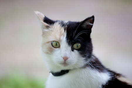 calico: Beautiful calico cat looking to the right