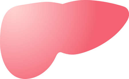 This is an illustration of a cute liver.  イラスト・ベクター素材
