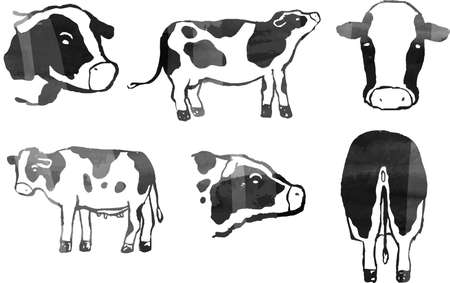 This is a illustration of Watercolor style Hand drawn realistic dairy cowillustration
