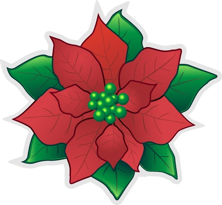 tranquillity: Christmas Poinsettia Flower Illustration