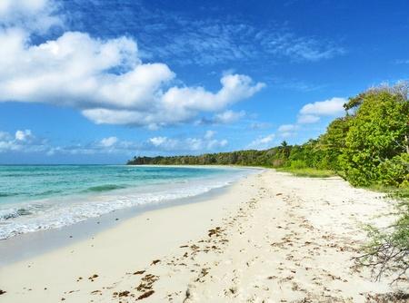 desert vegetation: Exotic Caribbean Wild Beach Stock Photo