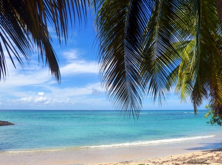 martinique: Caribbean Sea and Palm trees in Martinique Editorial