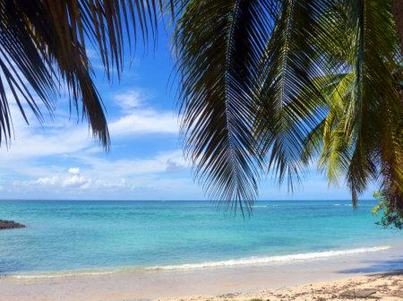 martinique: Mar Caribe y palmeras en Martinica