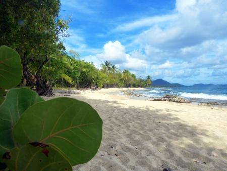 martinique: Caribe Playa y Palmeras en Martinica