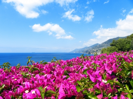 Bougainvillea Flowers on Mediterranean Seascape                      photo