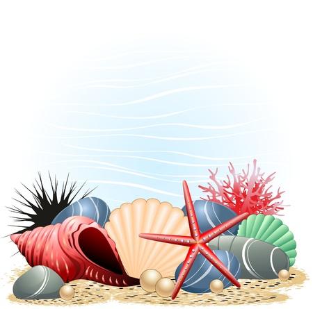 ostra: Estrellas de mar y conchas de mar de Coral de fondo