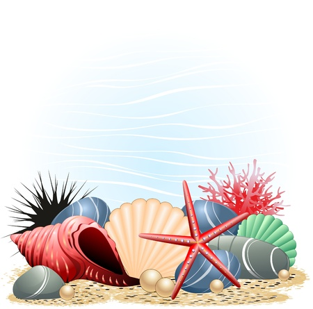 pebbles: Seashells Starfish and Coral Background