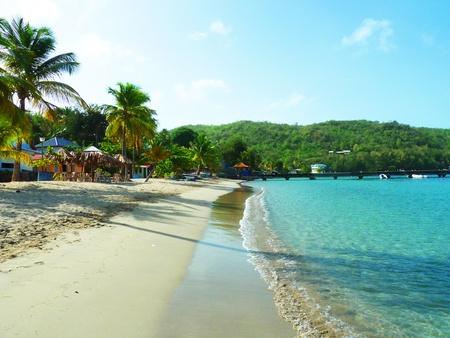 palmtrees: Quiet Tropical Caribbean Beach on Martinique Stock Photo