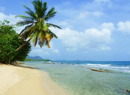martinique: Peaceful Tropical Wild Caribbean Beach en Martinica