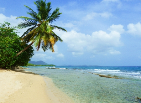 Peaceful Tropical Wild Caribbean Beach on Martinique photo