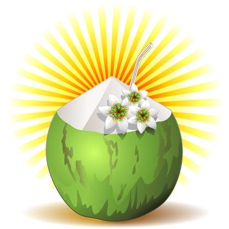 coconut fruit: Green Coconut Fruit Fresh Drink Illustration