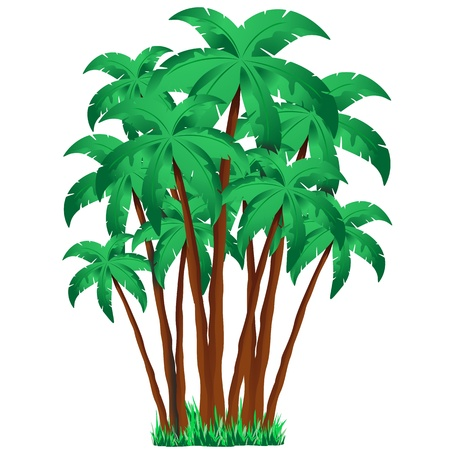 clump: Palm Trees Group