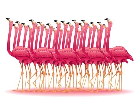 ピンクのフラミンゴのグループ