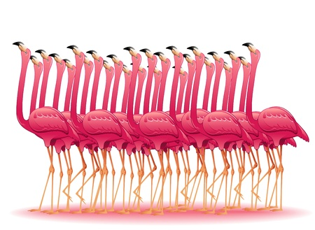 Flamants roses Groupe Illustration