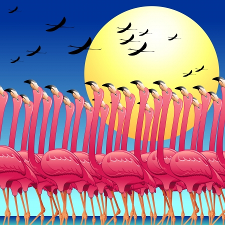 wildlife reserve: Pink Flamingos Dance on the Sun