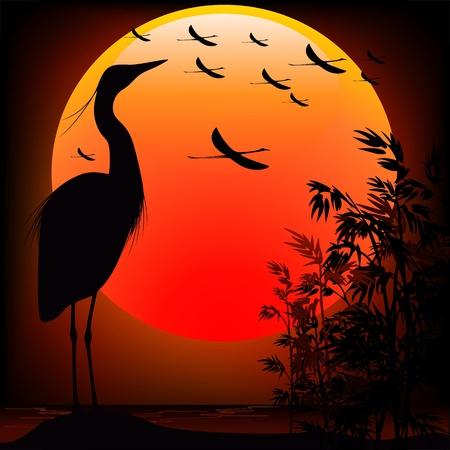 marsh plant: Heron Shape on Sunset Stunning