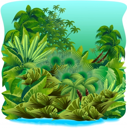 Jungle Tropical Green Rain Forest  Vector