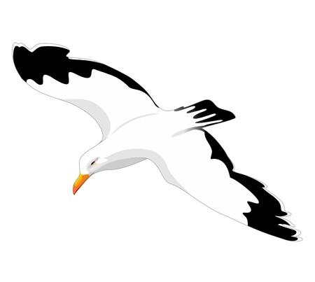 セグロカモメ カモメの飛行