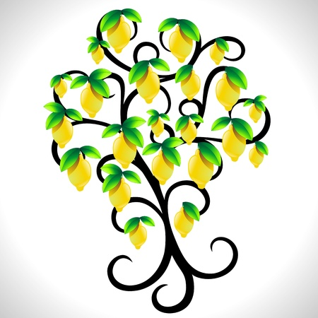 lemon tree: The Lemon Tree
