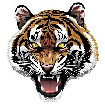 The Tiger Roar