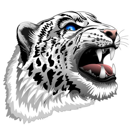 snow leopard: Snow Leopard Roar