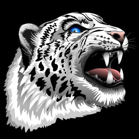 snow leopard: Snow Leopard Roar on Black