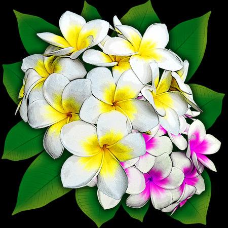 plumerias: Plumeria Flowers Bouquet Stock Photo